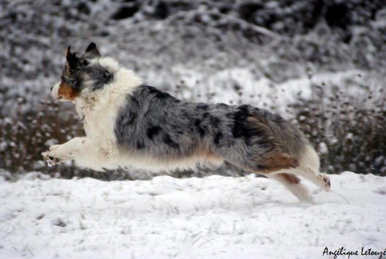 Chiens et chiots neige 2décembre2010 192